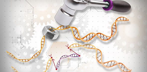 Developing regulations for biotechnology: is there a role for citizens?